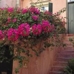 Gallery - Chania 14